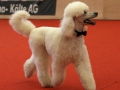 Lacey beim Dogdance