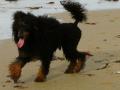 Mowgli nach 2 Wochen Meer