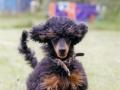 Mowgli Springinsfeld mit 5 Monaten