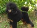 Mowgli VDP-Siegerschau