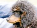 Mowgli schon in diesem Alter der typische Kopfausdruck