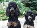 Ralou mit Junghund Biquette