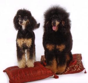 Biquette&Mowgli3c 12-12