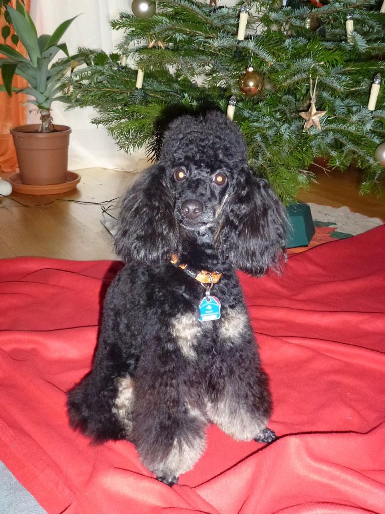 Akina Weihnachten 14 P1020118-2