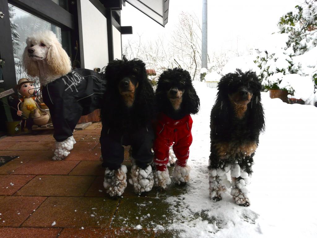 Schnee mit Anzug 15 P1120249