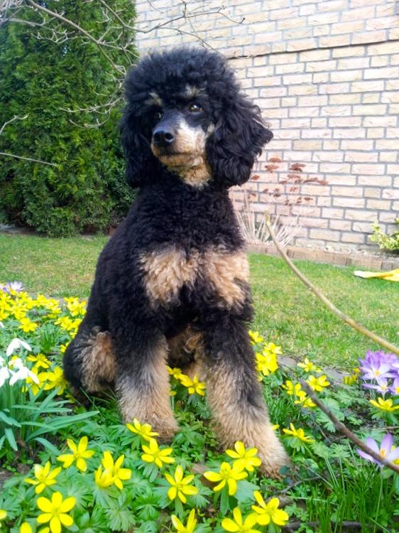 Cleo 2. Geb. Blumen