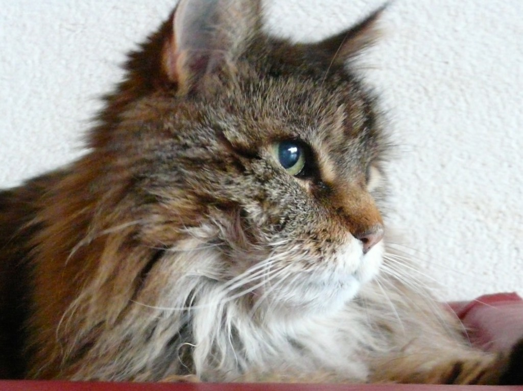 Oskar 15 Jahre