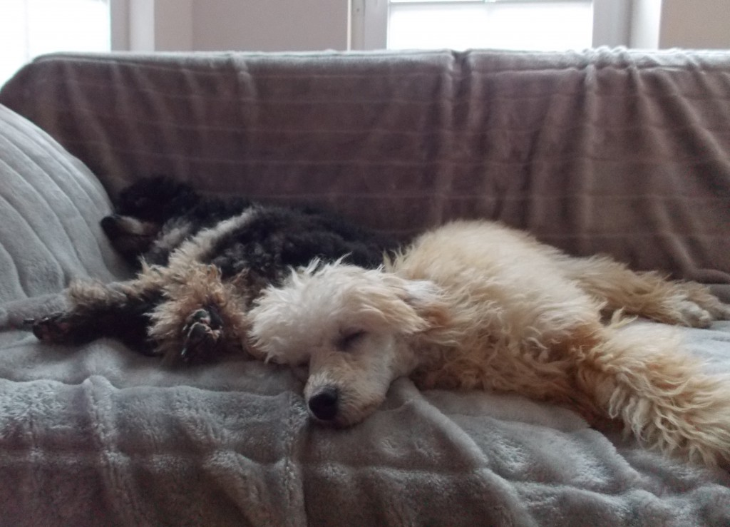 Cleo und Wilma
