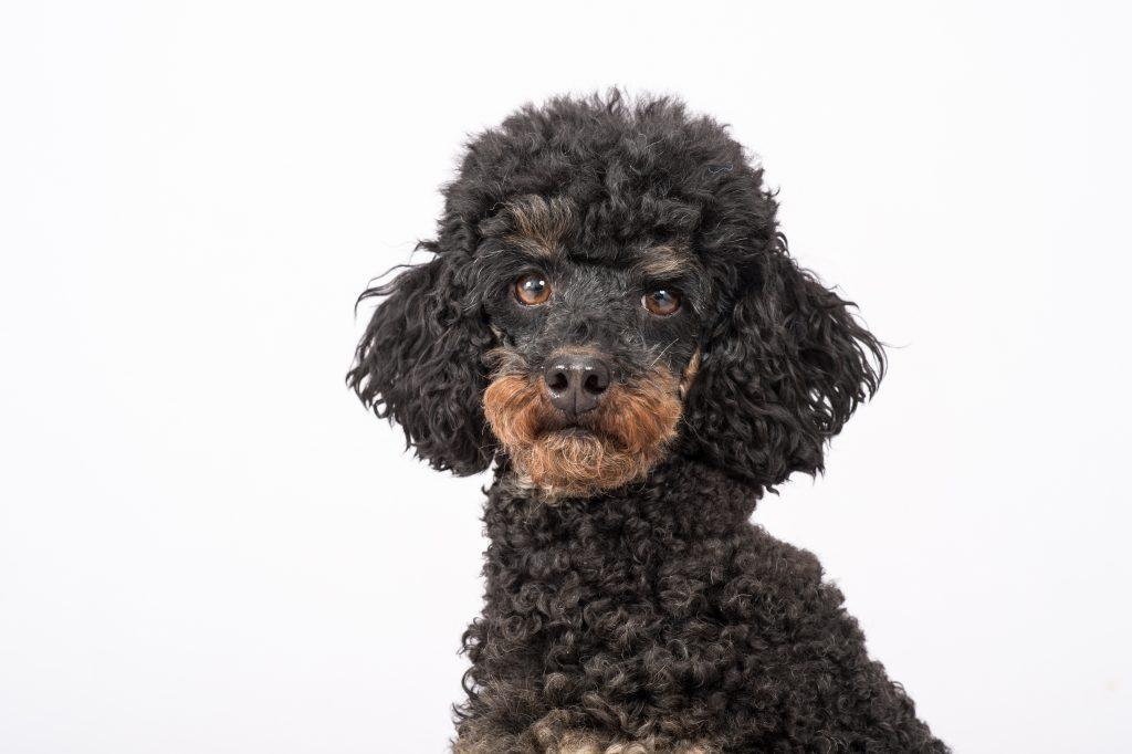 hundefoto-3989