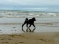 Mowgli und im Urlaub am Strand