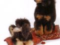 Mowgli mit Biquette