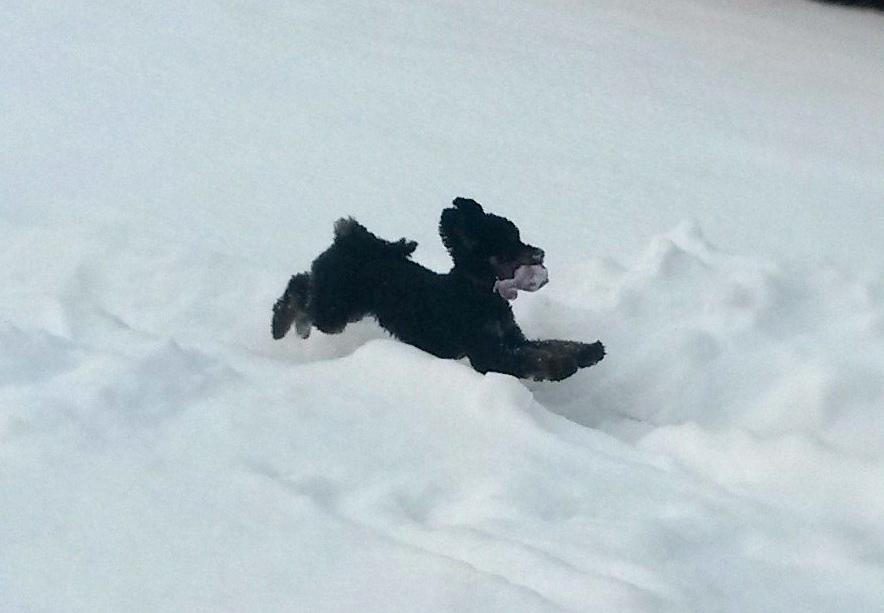 Ceddy fliegt Schnee 20141230_132056