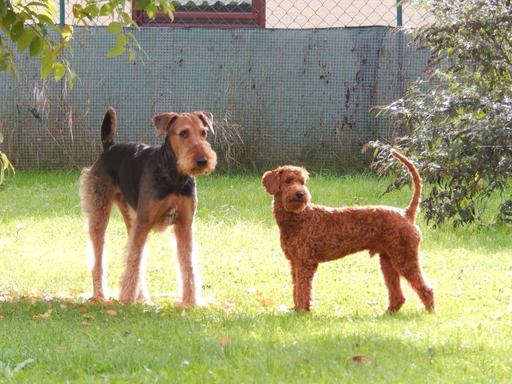 Dobby mit Tares stehend September Oktober 2014 009
