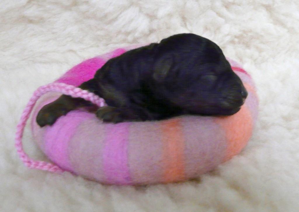 zur Erinnerung: Cleo am Tag ihrer Geburt
